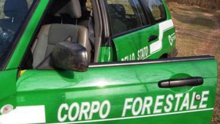 Corpo Forestale, ritorno alle origini